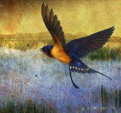 Christopher Vest - Marsh Swallow