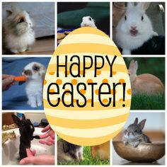 Easter is just around the corner and I know there are many who celebrate the religious meaning behind it, but there are also many who just love all the holiday brings.