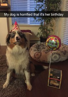 Best of Cute Dog Memes - Animal Memes Funny Dog Photos, Funny Dog Memes, Funny Animal Memes, Cute Funny Animals, Funny Animal Pictures, Funny Cute, Funny Dogs, Cute Dogs, Hilarious
