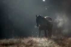 lapetiterobenoire:  Morning Light by Latyrx on Flickr.