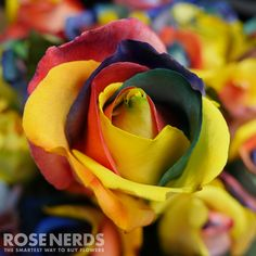RoseNerds.com Wholesale Rainbow Roses are fun, vibrant flowers perfect for any event. Wow your guests with all the beautiful colors in Rainbow Roses. #Rainbow #Equality