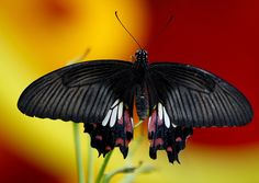 Beautiful Butterfly  https://flic.kr/p/6KZGRQ | Franklin Park 7-31-09  http://stores.ebay.com/crazy-weekly-discounts