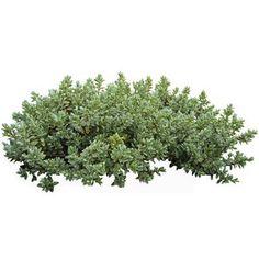 plant cutout - חיפוש ב-Google