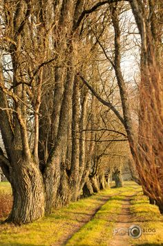 A tree tunnel and path in Latvia