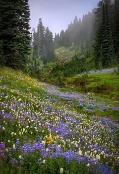 Ideas For Nature Landscape Photography Flowers Purple Nature Aesthetic, Flower Aesthetic, Aesthetic Drawing, Aesthetic Vintage, Spring Aesthetic, Landscape Photography, Nature Photography, Photography Tips, Photography Flowers