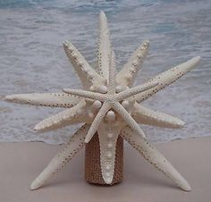 SALE* Starfish Tree Topper- Natural, Gold or Silver Glitter - Rustic Coastal Nautical Beach Christmas Xmas Tropical Sand Hawaii Hawaiian Top Beach Christmas Trees, Coastal Christmas Decor, Nautical Christmas, Holiday Tree, Christmas Tree Toppers, Christmas Holidays, Christmas Ideas, Purple Christmas, Elegant Christmas