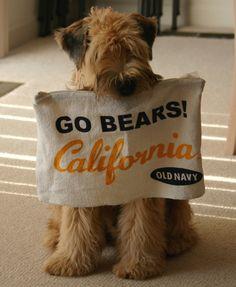 A winning 2012 football season for the Cal Bears!