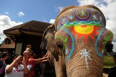 Rosamond Gifford Zoo's 45-year-old Asian elephant Siri, freshly face painted, gets close to a crowd of admirers during an elephant celebration.