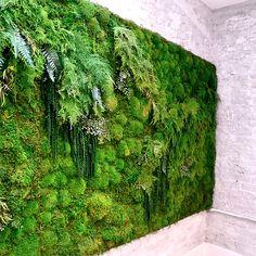 Beautiful, Custom Moss Walls & Panels Meditation Yoga Studio green wall by Artisan Moss Moss Wall Art, Moss Art, Jardin Vertical Artificial, Landscape Design, Garden Design, Garden Wall Designs, Green Landscape, Vertical Garden Wall, Vertical Gardens