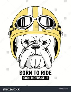 Bulldog portrait in a retro helmet of Racer. Fotr t shirt and other uses.