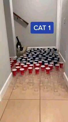 Funny Animal Jokes, Funny Animal Videos, Funny Animal Pictures, Cute Funny Animals, Funny Cute, Cute Cats, Hilarious, Funny Kittens, Really Funny Memes