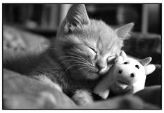 suggle with your stuffed animal.