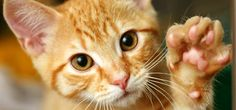 les chats - Ask.com Image Search