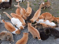 The 'Cat Islands' in Japan  have a cat population that is growing at an alarming rate. Many of the felines are suffering from treatable illnesses and dying very young because no one is willing to help them. Sign this petition to get the cats the help they deserve and to control the population in a non-lethal way.