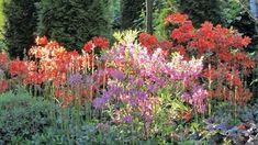 10 flerårige planter der pynter i din have og er umulige at slå ihjel Dream Garden, Planters, Flowers, Inspiration, Gardening, Finland, Raised Beds, Outdoor Ideas, Garden Ideas