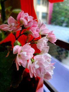 Digital, Rose, Flowers, Plants, Travel, Pink, Viajes, Destinations, Plant