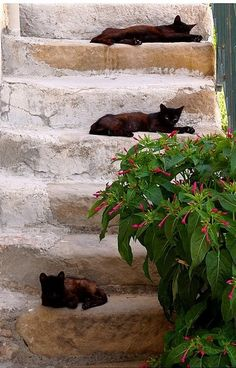 Cats siesta in Sicily    AND, THEY ALL KEEP TO THEIR OWN PARTICULAR STEP........ccp