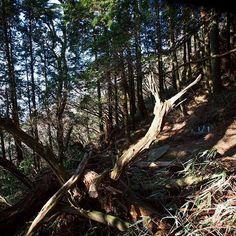 【koyamataiga】さんのInstagramをピンしています。 《beginning from endless taiga-koyama.com ・ ・ ・ ・ ・ ・ ・ ・#tale#tree#breath#blueplanet#time#mathernature#mathreearth#pray#love#loveyou#forever#photography#kobe#japan#trip#travel#outwalking#forest ・ ・ ・ ・ ・ ・ ・ ・ #森#写真#真理#写真#神戸#日本#祈り#旅》