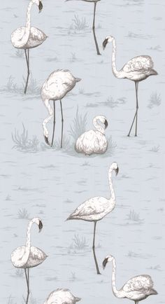 Cole & Son Contemporary  Restyled - Flamingos 95/8047