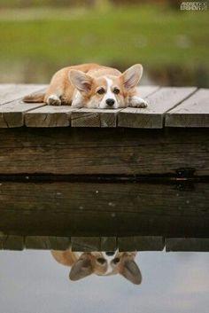 Dog Days of Summer!
