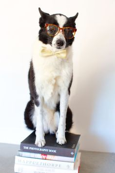 A dog wearing glasses while sitting on a stack of books.