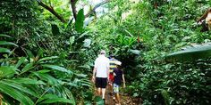 Experience local Fijian culture and discover the fortress of Fiji's last cannibal tribes as you explore the Naihehe caves. Cave Tours, Last Minute Deals, Fiji Islands, Location Map, Rafting, Weather Conditions, Cool Kids, Backpacking, Melbourne