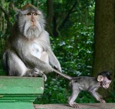 Funny monkey and baby via www.Facebook.com/PositivityToolbox
