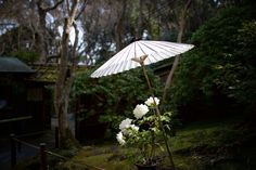 White by Yayoi Takeda - Photo 27793457 - 500px