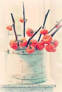 un bouquet de tomates