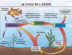 Diagram Showing Carbon Cycle During The Day