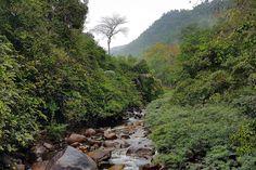 Jacuzzi in the Jungle ที่ Cabin Creek บ้านป่าริมธาร ทุ่งเพล จันทบุรี