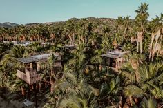 All Inclusive Resorts, Hotels And Resorts, Amazing Destinations, Vacation Destinations, Northern Lights Viewing, Treehouse Hotel, Luxury Tents, San Jose Del Cabo, Romantic Picnics