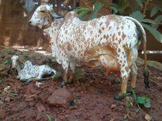 Gir Cow and Heifer Cattle Farming, Livestock, Large Animals, Cute Animals, Gado Leiteiro, Forest Habitat, Gyr, Animal Action, Dairy Cattle