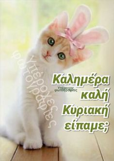 Animals, Gatos, Quotes, Animales, Animaux, Animal Memes, Animal, Animais, Dieren