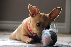 HoneyBee & her ball