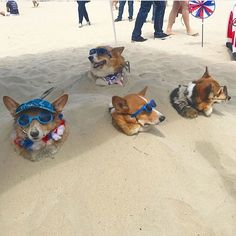 Long Beach Corgi Beach Day is the Best Day of the Year | Unleashed