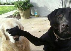 Mesmerizing Training Your Dog Proven, Useful Hints And Tips Ideas. Remarkable Training Your Dog Proven, Useful Hints And Tips Ideas. Funny Dog Memes, Funny Dog Pictures, Funny Animal Videos, Cat Memes, Funny Dogs, Cute Dogs, Funny Animals, Cool Pictures, Cute Animals