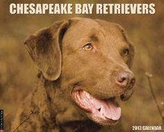 Chesapeake Bay Retrievers 2013 Wall Calendar,$13.99