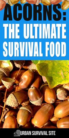 Acorn is probably one of the most overlooked survival foods. Here is how to select them, prepare them for consumption, and use them in recipes. camping ideas Acorns: The Ultimate Survival Food Urban Survival, Survival Life, Survival Food, Homestead Survival, Wilderness Survival, Camping Survival, Outdoor Survival, Survival Prepping, Survival Skills