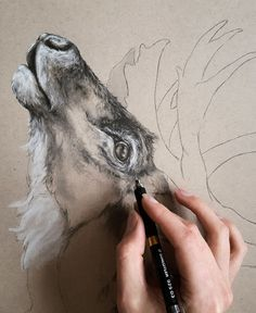 Current work in progress shot of a caribou drawing I've started. @_nestandburrow_