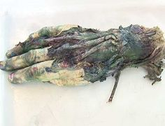Morten Viskum -Norwegian artist who uses cadaver hands for paintbrush    Google Image Result for http://gfx.dagbladet.no/pub/artikkel/5/53/537/537986/hXnda503_384_1213271175_1213271191.jpg