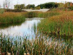 #DownsviewPark Duck Pond, #Toronto, #Canada