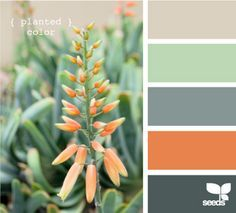 Design Seeds, for all who love color. Apple Yarns uses Design Seeds for color inspiration for knitting and crochet projects. Exterior Paint Colors For House, Paint Colors For Home, Exterior Colors, Exterior Design, Paint Colours, Exterior Trim, Living Room Color Schemes, Living Room Colors, Colour Schemes