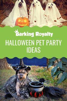 Discover 7 different games you can organize for your canine invitees and make your Halloween party pet-safe. Discover 7 different games you can organize for your canine invitees and make your Halloween party pet-safe. Best Dog Costumes, Dog Halloween Costumes, Halloween Treats, Halloween Party Games, Theme Halloween, Pet Safe, Dog Birthday, Animal Party, Holiday Fun