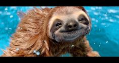If SLOTH is a SIN, I'm going to HELL