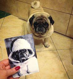 Для любителей мопсов у нас есть целая серия обложек на паспорт и открыток с малышом Остином. . Ставь лайк, если собака - лучший друг человека ❤ Если кошки - наше все, ставь любой смайлик в комменты 👇 . 👌👌👌 💰 Цена кожаных обложек для паспорта 1090р 👆 Полный каталог на сайте artistina.ru/1 🚀 Доставка по всему миру  👌👌👌 #artistina_ru #artistina_обложкидляпаспорта #обложканапаспорт #купитьобложкунапаспорт #wildstrawberryphoto #ostinfashion #dog #dogs #мопс