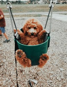 Super Cute Puppies, Baby Animals Super Cute, Cute Baby Dogs, Cute Funny Dogs, Cute Little Puppies, Cute Dogs And Puppies, Cute Little Animals, Cute Funny Animals, Adorable Dogs