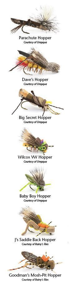 Grasshoppers: The Only Kosher Insect | Northwest Fly Fishing
