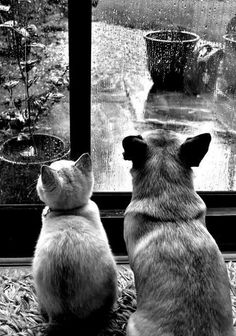 Waiting for the rain to stop...