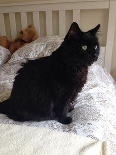 Murphy Cat | Pawshake